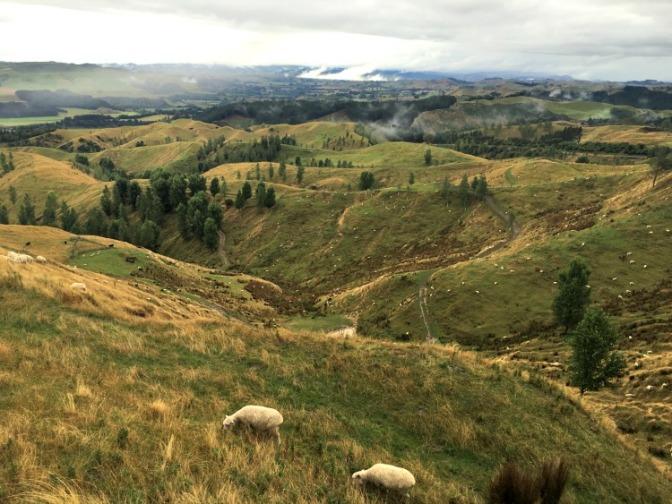 29 Nature North Island New Zealand